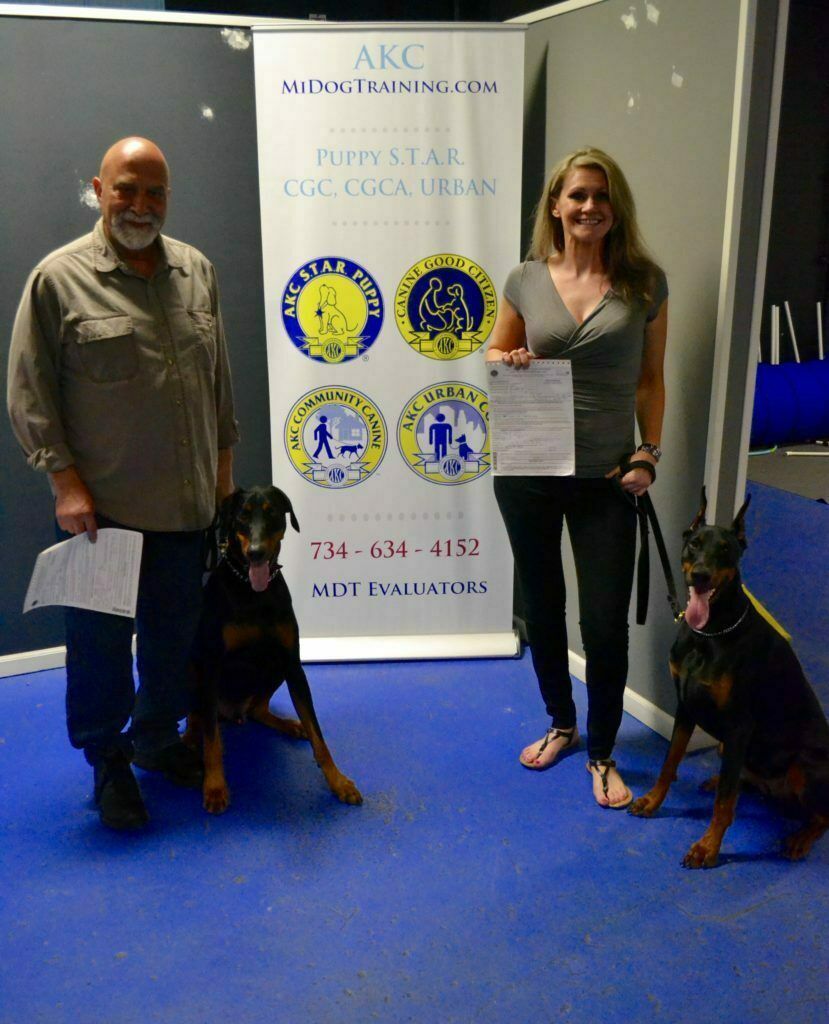 Michigan Dog Training, Doberman Pinscher, Doberman, Canine Good Citizen, CGC, dog training, Plymouth, Michigan