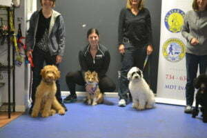 Michigan Dog Training, Plymouth, Michigan, Canine Good Citizen, CGC, Puppy STAR, Puppy S.T.A.R., puppy obedience, puppy training, dog training