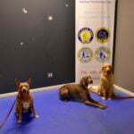 Michigan Dog Training, CGCA, Advanced Canine Good Citizen, Plymouth, Michigan