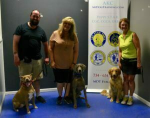 Michigan Dog Training, Plymouth, Michigan, Advanced Canine Good Citizen, CGCA