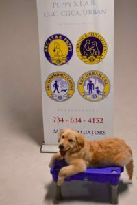 Michigan Dog Training, Plymouth, Michigan, Puppy STAR, Puppy S.T.A.R., Puppy classes, puppy training