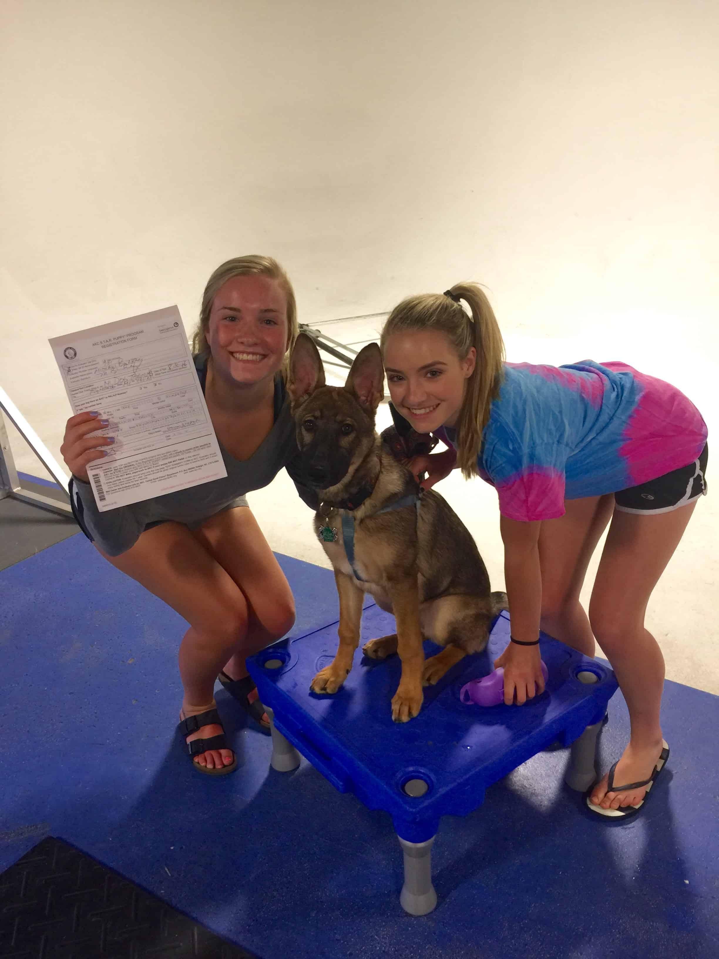 German Shepherd Michigan Dog Training