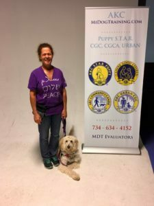 Michigan Dog Training, Service dog in training, Advanced Canine Good Citizen, Plymouth, CGCA