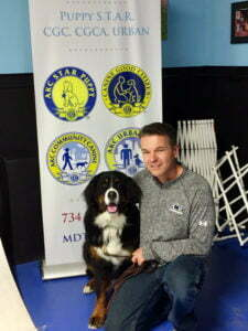Bernese Mountain Dog, Michigan Dog Training, Plymouth, Michigan, Canine Good Citizen, CGC, dog training