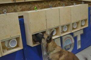 Nosework, K9 Nosework, Michigan Dog Training, dog training
