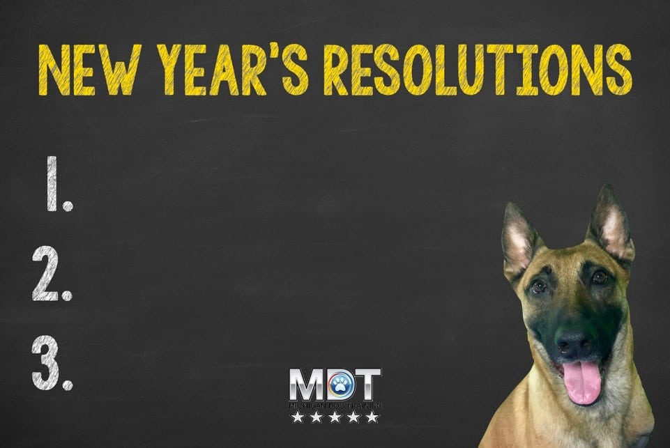 dog training, new year's resolutions, Michigan Dog Training, Plymouth, Michigan