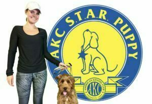 puppy classes, puppy obedience, Michigan Dog Training, Plymouth, Michigan, Canton, Labradoodle, American Kennel Club, Puppy S.T.A.R.