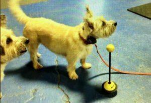 dog training, Michigan Dog Training, teach your dog to go to place, behavior shaping, clicker training