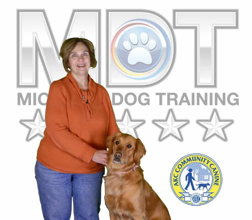 Michigan Dog Training, Plymouth, Michigan, Service Dog, Service Dog in Training, Mobility Service Dog, Advanced Canine Good Citizen, Advanced CGC, Community Canine Good Citizen