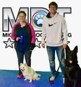 German Shepherd, American Eskimo, Michigan Dog Training, Plymouth, Michigan, Canine Good Citizen, CGC