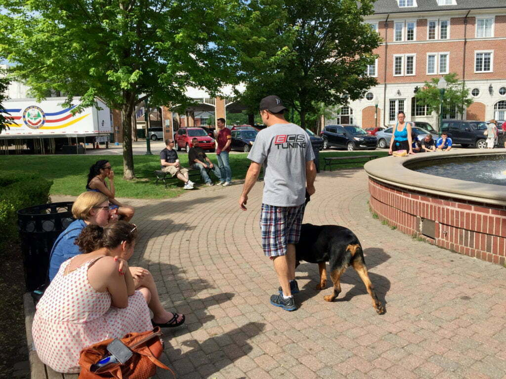 Michigan Dog Training, Rottweiler, Plymouth, Michigan, CGCU, Canine Good Citizen Urban