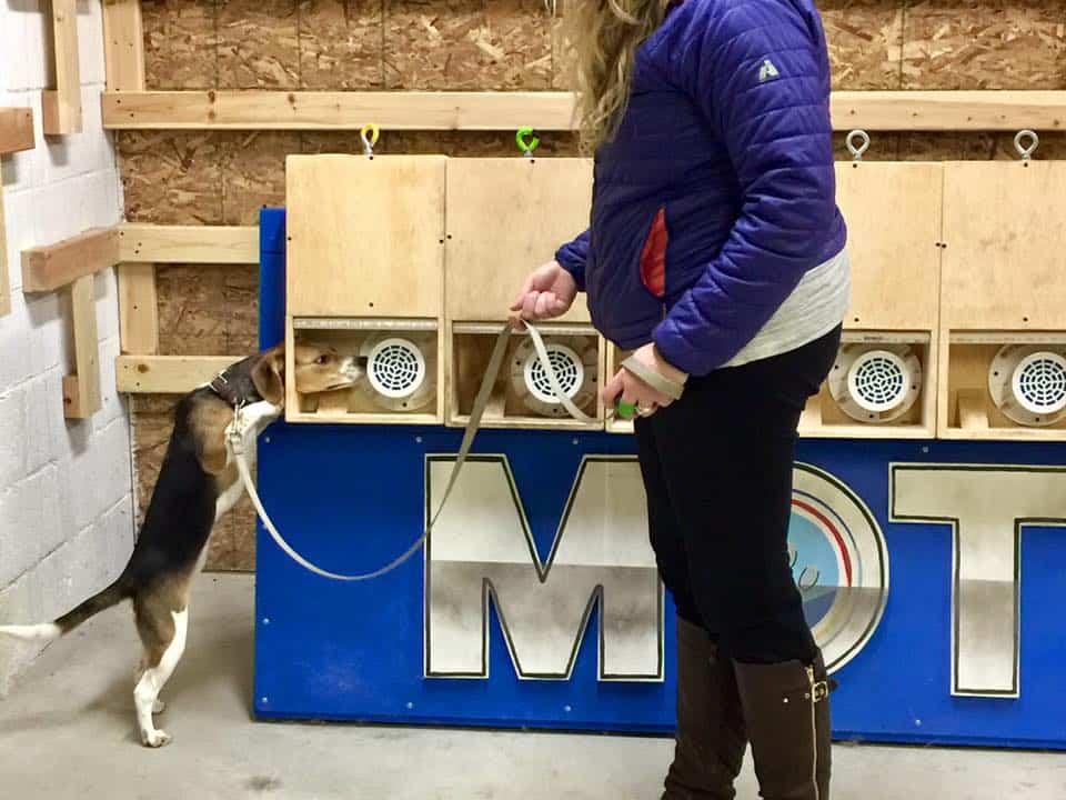 Dog Day Training Academy