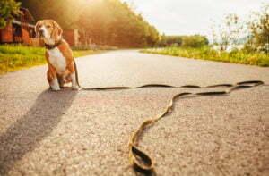 Michigan Dog Training, teach your dog to stay,