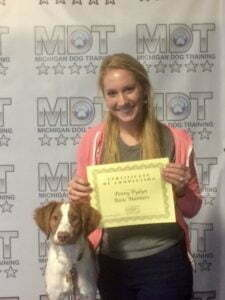Michigan Dog Training, E-Collar, E-Collar training, Canine Good Citizen, CGC