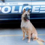 Police Dog, Michael Burkey, Michigan Dog Training