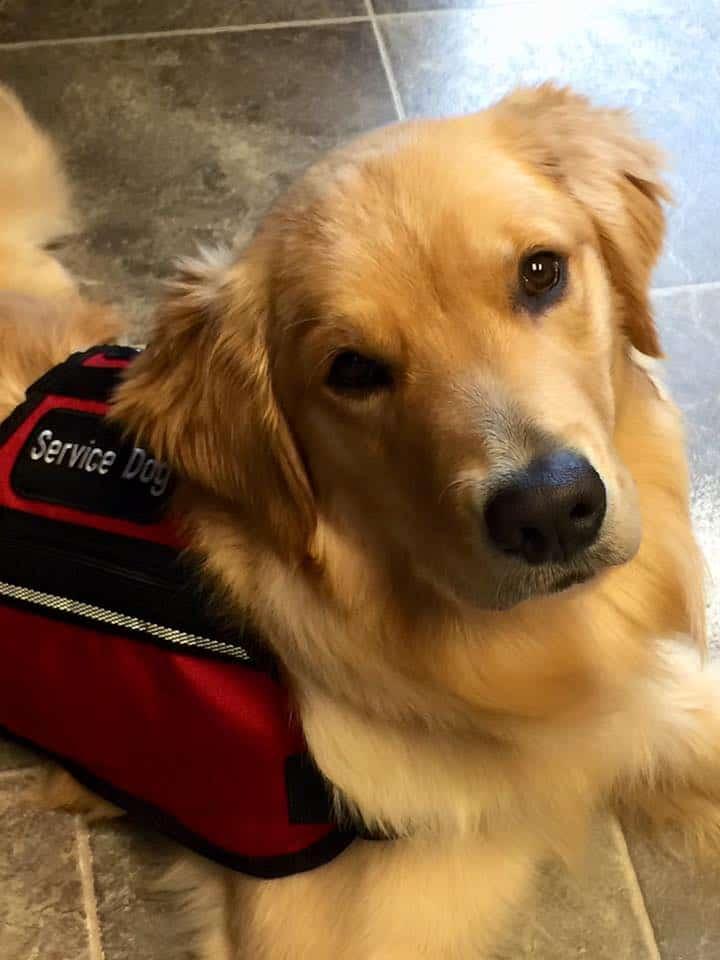 Relatively Board and Train | Michigan Dog Training XA57