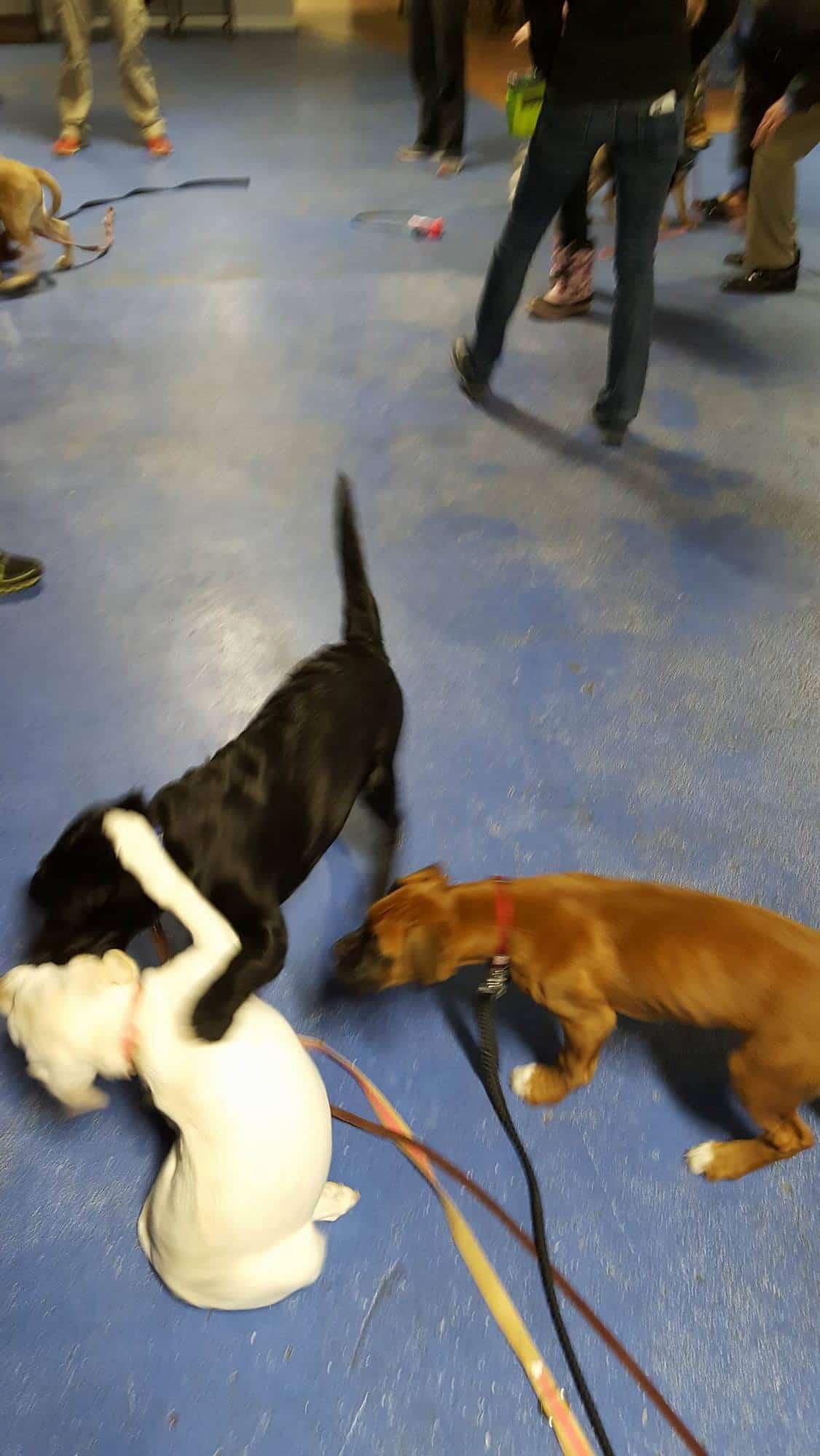 German Shepherd | Michigan Dog Training